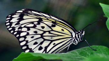 Alas de mariposa para evitar que falsifiquen las tarjetas bancarias